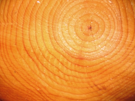 69b73-growth_rings